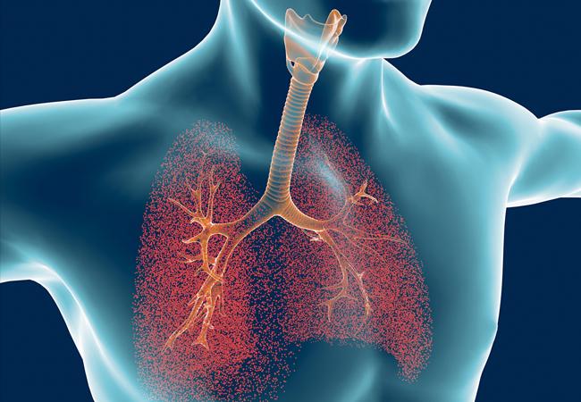 Harta plamani si cai respiratorii